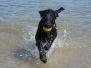 Week 18 zwemmen met Jutta