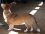 Jonge hondendag Fien 10/04/2011